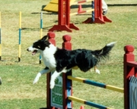 wick-joy-jump