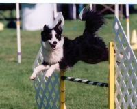 wick-jump