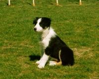 wick-puppy