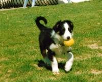 wick-ball-pup